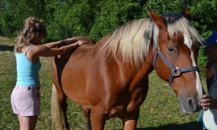 Séance magnetisme énergétique à Fleuron le cheval à belley Ain 01